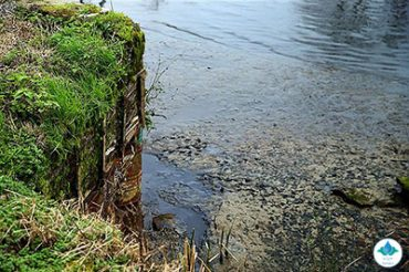 آلودگی آب، معضل فراموش شده تالابهای ایران