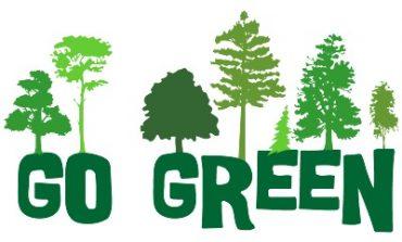 چرا اهمیت درختکاری بیشتر از چمن کاری است؟!